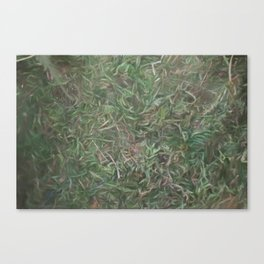 grass lawn texturized for background and texture Canvas Print