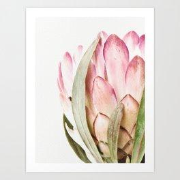Pink Protea Flower Art Print