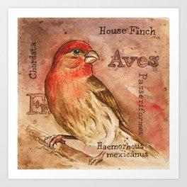 Finch Watercolor Art Print