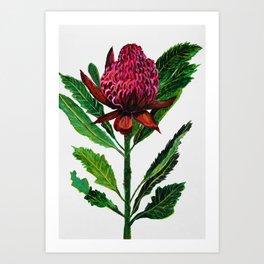 Red Flowers Floral Waratah Protea, botanical Kunstdrucke