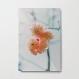 Pale Pink Soft Flowers (Color) Metal Print