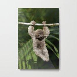 Hanging Around - Baby Three-toed Sloth Metal Print
