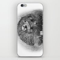 hedgehog iPhone & iPod Skins featuring Hedgehog by MARIA BOZINA - PRINT