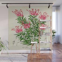 Grevillea Rosea Vintage Botanical Floral Flower Plant Scientific Illustration Wall Mural