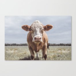 Animal Photography | Cow Portrait Photography | Farm animals Canvas Print