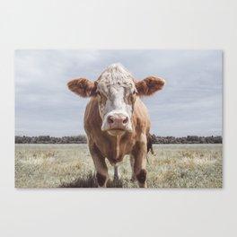 Animal Photography   Highland Cow Portrait Photography   Farm animals Canvas Print