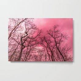 Pink sky over naked trees Metal Print