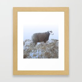 Solitude on straw Framed Art Print