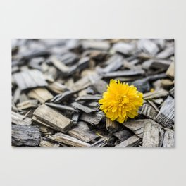 Rustic yellow flower  Canvas Print
