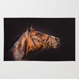 Horse portrait over a dark background. Closeup Horse Head. Rug