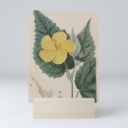 Flower 339 pavonia spinifex Prickly seeded Pavonia13 Mini Art Print
