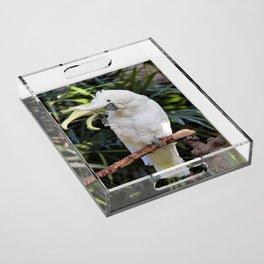 Sulfur-Crested Cockatoo Salutes the Photographer Acrylic Tray