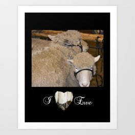 Wooly Love Art Print