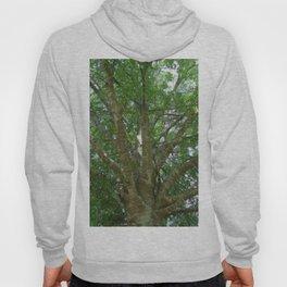 Wise Old Tree Too Hoody