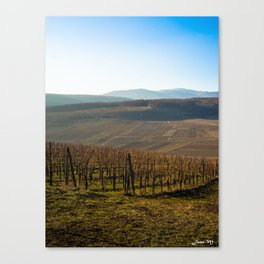 French vineyards 2 Canvas Print