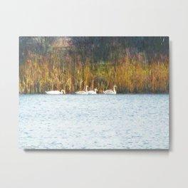 Swans in Autumn Metal Print