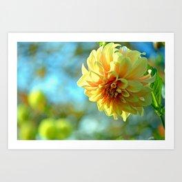 Yellow Dahlia Art Print