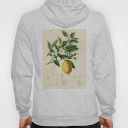 Vintage Lemon Tree Illustration Hoody