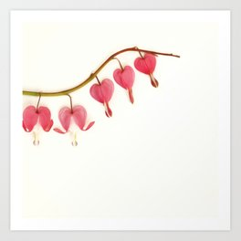 Bleeding Hearts... Art Print