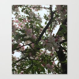 Lighted Branches Canvas Print