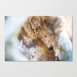 Weathered broken tree branch up close. Canvas Print