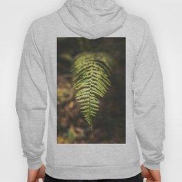 Fern in a forest Hoody
