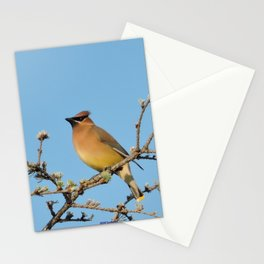 Cedar Waxwing Faces Sunset Stationery Cards