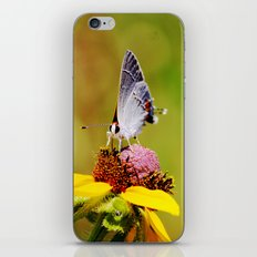 Brown Eyed Susan & Hairstreak Butterfly iPhone Skin