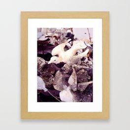 Dove Framed Art Print