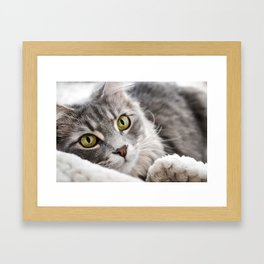 Cat lying with wide eyes open Framed Art Print