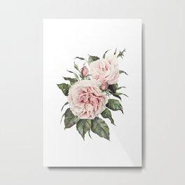 Pink Garden Roses Watercolor Metal Print