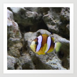 Sea World Colorful Fish Art Print