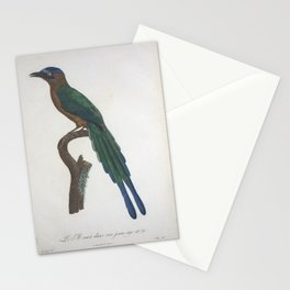 Vintage Bird Print - Young motmot Stationery Cards