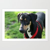 doberman Art Prints featuring Doberman by Ornithology