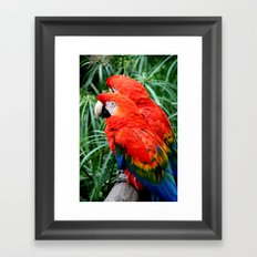 Scarlet Macaws Framed Art Print
