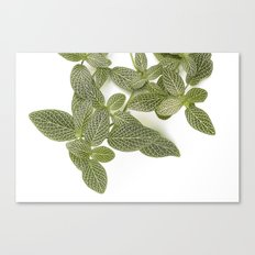 Nerve Plant Canvas Print