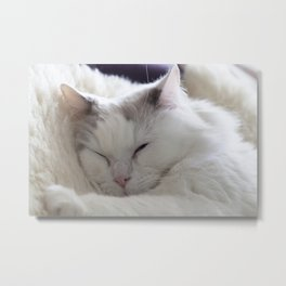 Ragdoll Cat Cuddles Metal Print