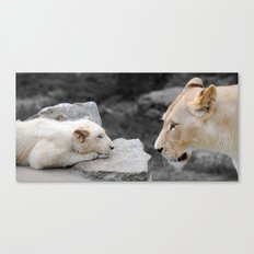 A Mothers Love . . . White Lion Mother and her Cub    Canvas Print