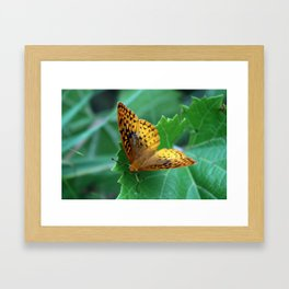 Great Spangled Fritillary Butterfly Framed Art Print