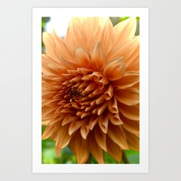 Up Close Orange Flower Art Print
