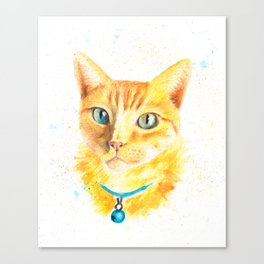 Pony the cat Canvas Print
