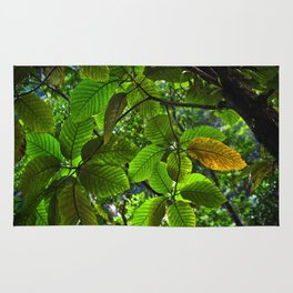 Backlit Leaves in the Peruvian Amazon Rug