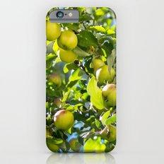Swedish apples Slim Case iPhone 6s