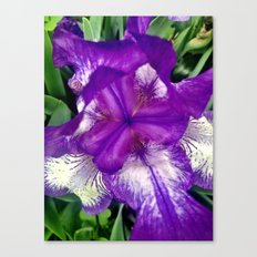 Purple in Bloom Canvas Print
