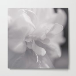 Camellia - Flower Photography Metal Print
