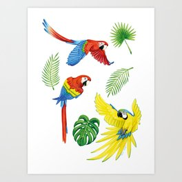 Tropical Feathers Art Print