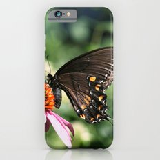 Eastern Tiger Swallowtail - Black Morph iPhone 6s Slim Case