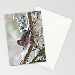 Peaceful Winter Dove Stationery Cards