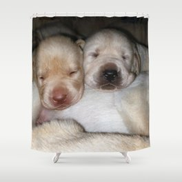 Little Polar Bears with yellow lab puppies Shower Curtain