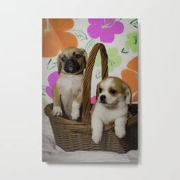 Puggle Puppy and a Beaglier Puppy Sitting Together in front of a Spring Flower Background Metal Print